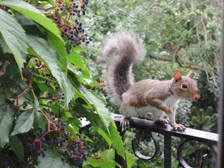 squirrel-autumn-equinox-2016